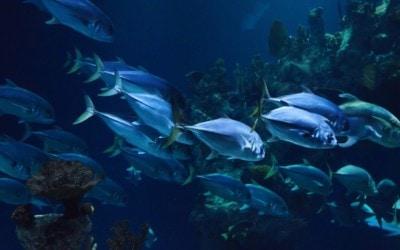 Combien ça coûte faire de la plongée sous-marine?