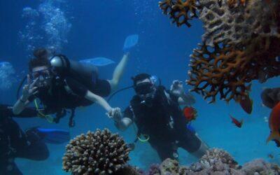 Les différents niveaux de plongée sous-marine